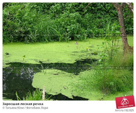 Заросшая лесная речка, эксклюзивное фото № 62825, снято 10 июля 2007 г. (c) Татьяна Юни / Фотобанк Лори