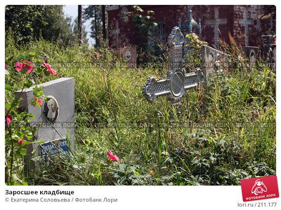 Купить «Заросшее кладбище», фото № 211177, снято 4 августа 2007 г. (c) Екатерина Соловьева / Фотобанк Лори