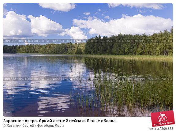 Заросшее озеро. Яркий летний пейзаж. Белые облака, фото № 309353, снято 21 июля 2007 г. (c) Катыкин Сергей / Фотобанк Лори