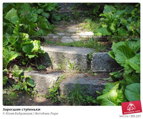 Заросшие ступеньки, фото № 305237, снято 1 июня 2008 г. (c) Юлия Бобровских / Фотобанк Лори
