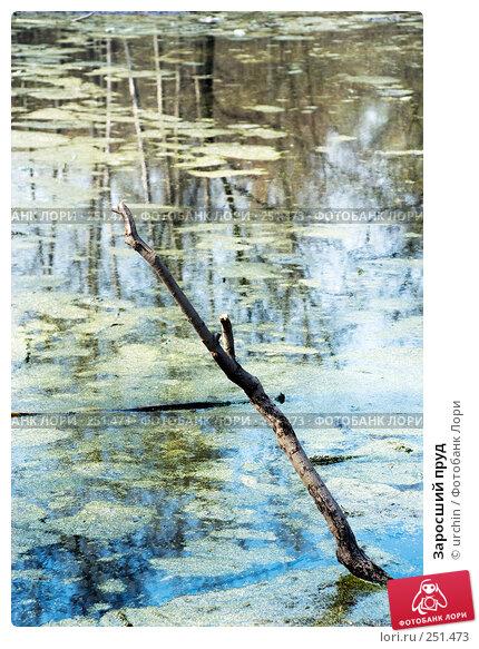 Купить «Заросший пруд», фото № 251473, снято 12 апреля 2008 г. (c) urchin / Фотобанк Лори