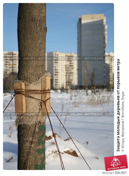 Защита молодых деревьев от порывов ветра, фото № 206497, снято 21 февраля 2008 г. (c) Игорь Веснинов / Фотобанк Лори