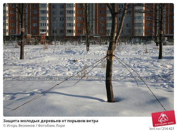 Купить «Защита молодых деревьев от порывов ветра», фото № 214421, снято 21 февраля 2008 г. (c) Игорь Веснинов / Фотобанк Лори