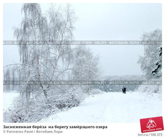 Заснеженная берёза  на берегу замёрзшего озера, фото № 100373, снято 15 февраля 2007 г. (c) Parmenov Pavel / Фотобанк Лори