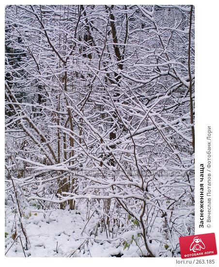 Заснеженная чаща, фото № 263185, снято 4 ноября 2007 г. (c) Вячеслав Потапов / Фотобанк Лори