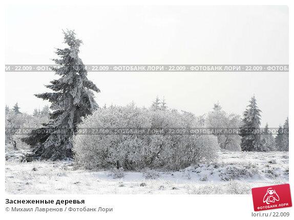 Заснеженные деревья, фото № 22009, снято 12 февраля 2006 г. (c) Михаил Лавренов / Фотобанк Лори
