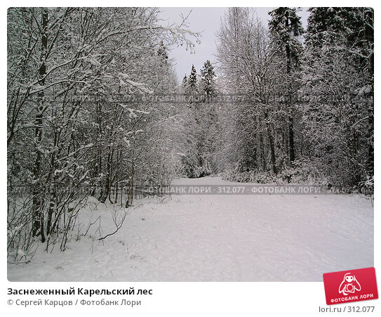 Заснеженный Карельский лес, фото № 312077, снято 3 апреля 2005 г. (c) Сергей Карцов / Фотобанк Лори