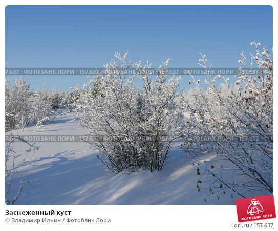 Заснеженный куст, фото № 157637, снято 23 декабря 2007 г. (c) Владимир Ильин / Фотобанк Лори