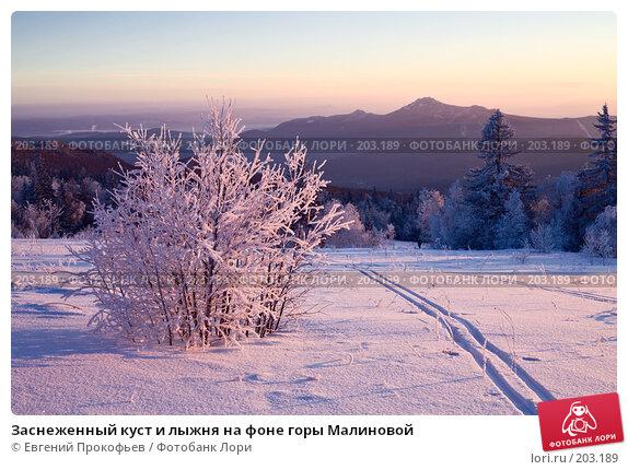 Купить «Заснеженный куст и лыжня на фоне горы Малиновой», фото № 203189, снято 8 января 2008 г. (c) Евгений Прокофьев / Фотобанк Лори