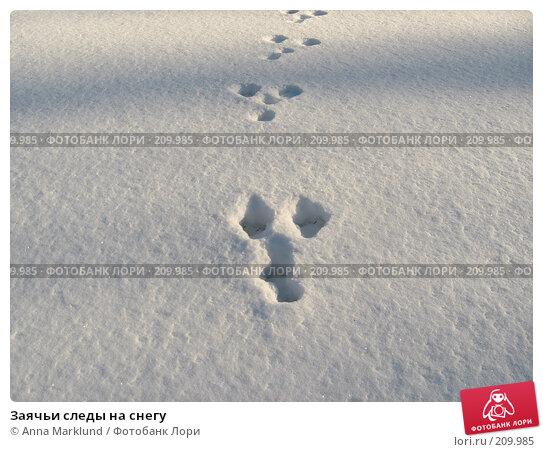 Заячьи следы на снегу, фото № 209985, снято 17 февраля 2008 г. (c) Anna Marklund / Фотобанк Лори
