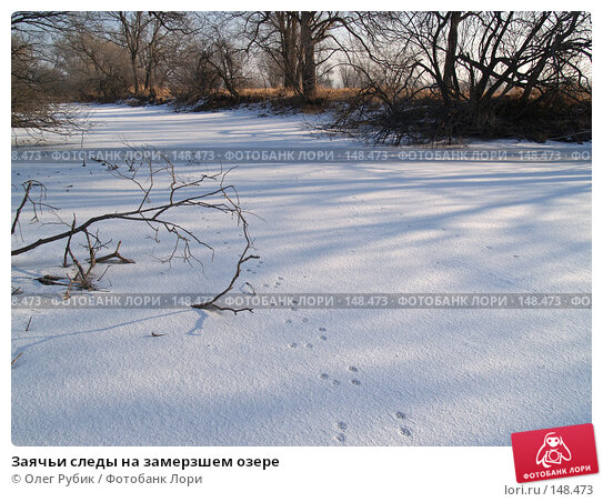 Купить «Заячьи следы на замерзшем озере», фото № 148473, снято 14 декабря 2007 г. (c) Олег Рубик / Фотобанк Лори