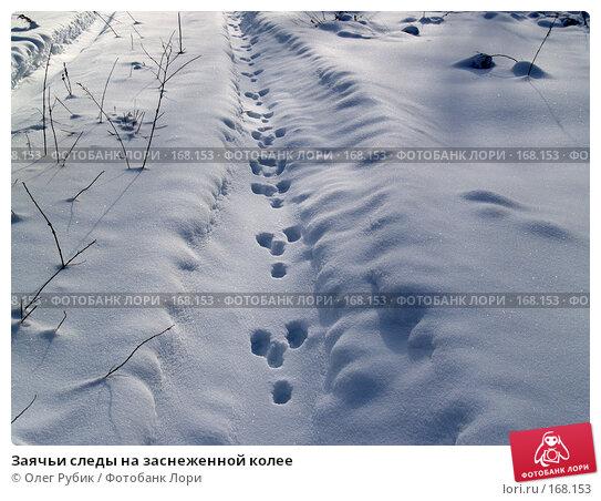 Заячьи следы на заснеженной колее, фото № 168153, снято 5 января 2008 г. (c) Олег Рубик / Фотобанк Лори