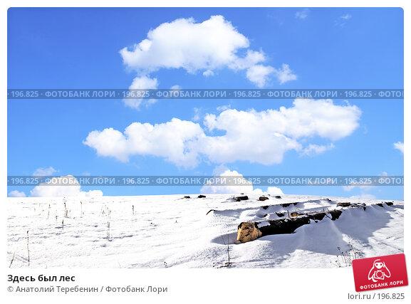 Здесь был лес, фото № 196825, снято 27 января 2008 г. (c) Анатолий Теребенин / Фотобанк Лори