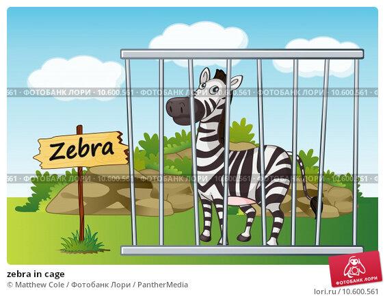 zebra in cage. Стоковая иллюстрация, иллюстратор Matthew Cole / PantherMedia / Фотобанк Лори