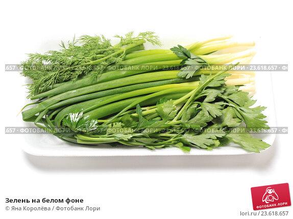 Купить «Зелень на белом фоне», эксклюзивное фото № 23618657, снято 27 сентября 2016 г. (c) Яна Королёва / Фотобанк Лори