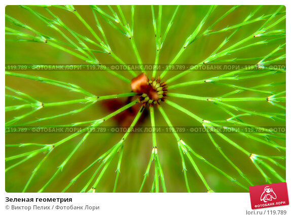 Зеленая геометрия, фото № 119789, снято 1 июля 2007 г. (c) Виктор Пелих / Фотобанк Лори