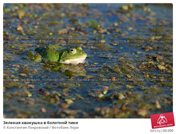 Зеленая квакушка в болотной тине, фото № 60009, снято 9 июня 2007 г. (c) Константин Покровский / Фотобанк Лори