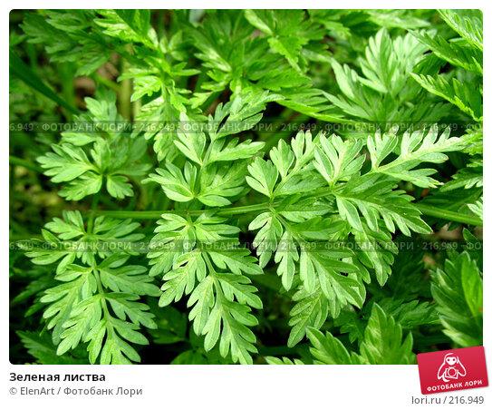 Зеленая листва, фото № 216949, снято 22 октября 2016 г. (c) ElenArt / Фотобанк Лори