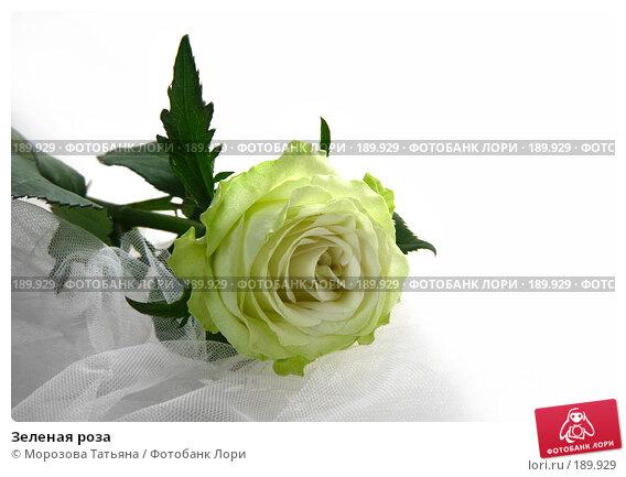 Зеленая роза, фото № 189929, снято 14 января 2008 г. (c) Морозова Татьяна / Фотобанк Лори