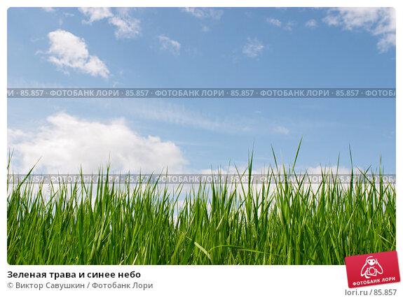 Зеленая трава и синее небо, фото № 85857, снято 21 января 2017 г. (c) Виктор Савушкин / Фотобанк Лори