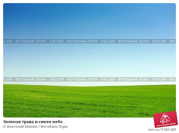Зеленая трава и синее небо. Стоковое фото, фотограф Анатолий Хвисюк / Фотобанк Лори