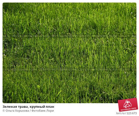 Купить «Зеленая трава, крупный план», фото № 223673, снято 25 апреля 2018 г. (c) Ольга Хорькова / Фотобанк Лори