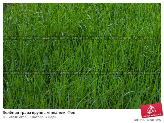 Купить «Зелёная трава крупным планом. Фон», фото № 32009897, снято 9 мая 2019 г. (c) Литвяк Игорь / Фотобанк Лори