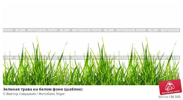 Зеленая трава на белом фоне (шаблон), фото № 86509, снято 26 июля 2017 г. (c) Виктор Савушкин / Фотобанк Лори