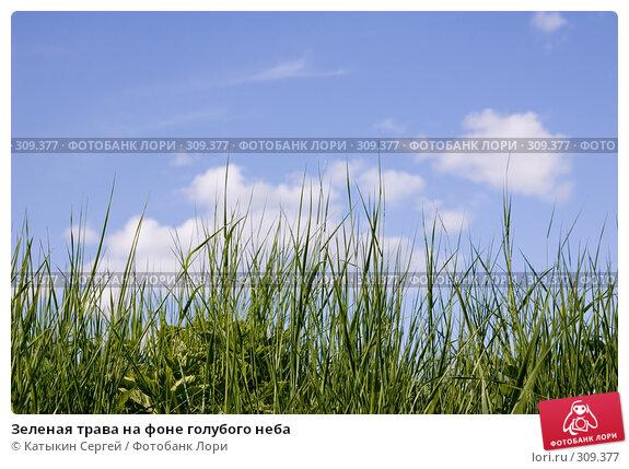 Купить «Зеленая трава на фоне голубого неба», фото № 309377, снято 31 мая 2008 г. (c) Катыкин Сергей / Фотобанк Лори