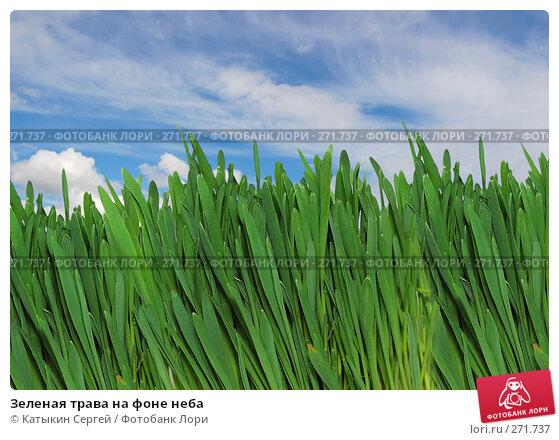 Купить «Зеленая трава на фоне неба», фото № 271737, снято 15 марта 2008 г. (c) Катыкин Сергей / Фотобанк Лори