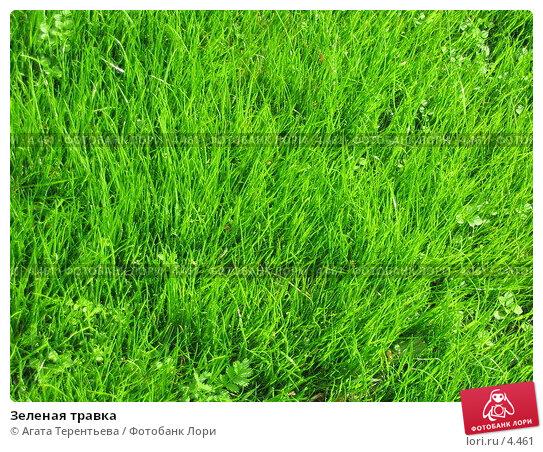 Купить «Зеленая травка», фото № 4461, снято 21 мая 2006 г. (c) Агата Терентьева / Фотобанк Лори