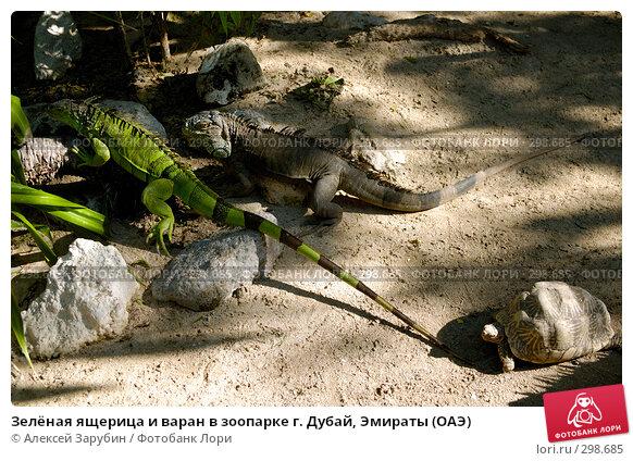 Зелёная ящерица и варан в зоопарке г. Дубай, Эмираты (ОАЭ), фото № 298685, снято 16 ноября 2007 г. (c) Алексей Зарубин / Фотобанк Лори