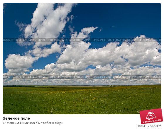Зеленое поле, фото № 318493, снято 22 июля 2007 г. (c) Максим Пименов / Фотобанк Лори