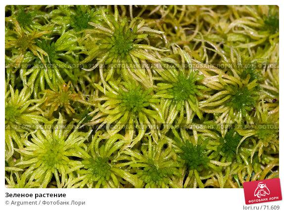 Зеленое растение, фото № 71609, снято 5 октября 2006 г. (c) Argument / Фотобанк Лори