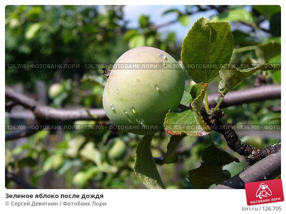 Зеленое яблоко после дождя, фото № 126705, снято 15 июля 2007 г. (c) Сергей Девяткин / Фотобанк Лори