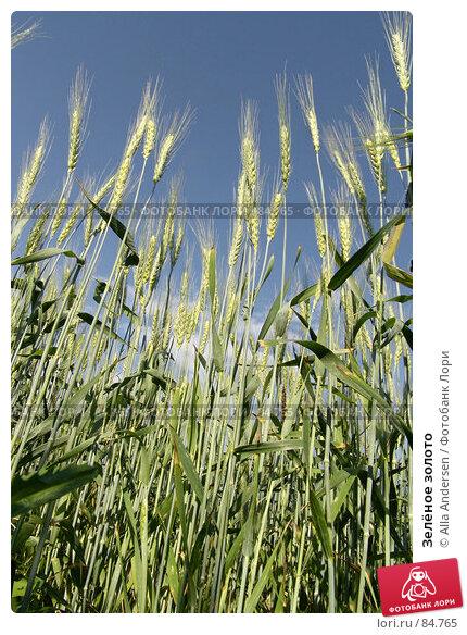 Зелёное золото, фото № 84765, снято 5 июня 2006 г. (c) Alla Andersen / Фотобанк Лори