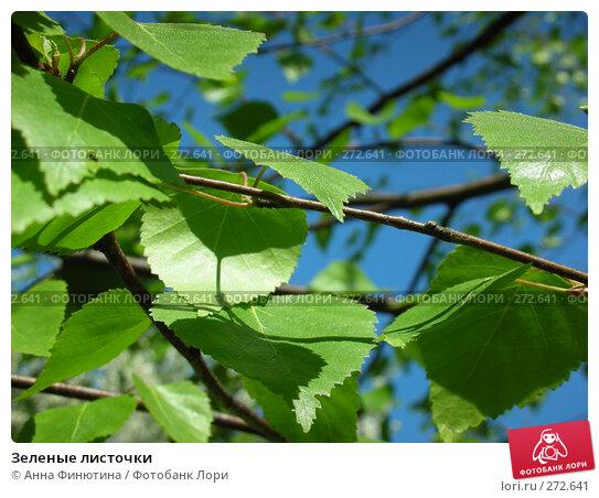 Зеленые листочки, фото № 272641, снято 3 мая 2008 г. (c) Анна Финютина / Фотобанк Лори