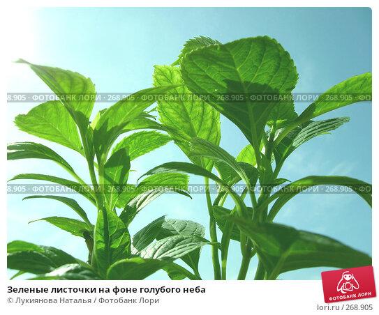 Зеленые листочки на фоне голубого неба, фото № 268905, снято 2 мая 2008 г. (c) Лукиянова Наталья / Фотобанк Лори