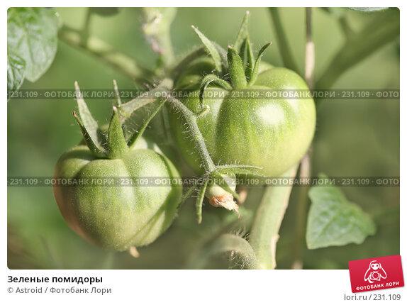 Зеленые помидоры, фото № 231109, снято 31 августа 2007 г. (c) Astroid / Фотобанк Лори