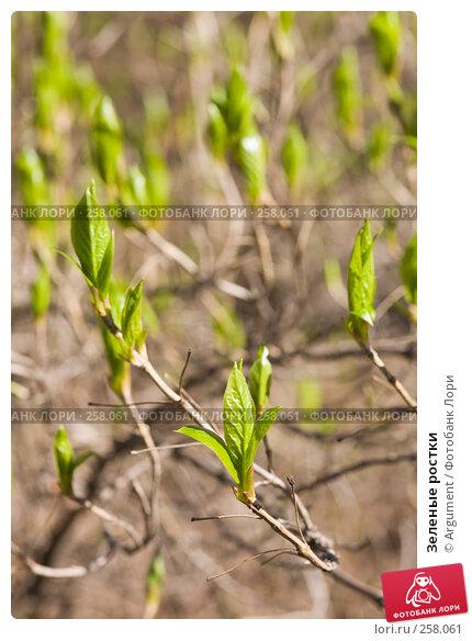 Купить «Зеленые ростки», фото № 258061, снято 20 апреля 2008 г. (c) Argument / Фотобанк Лори