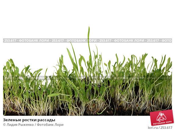 Зеленые ростки рассады, фото № 253617, снято 28 марта 2008 г. (c) Лидия Рыженко / Фотобанк Лори