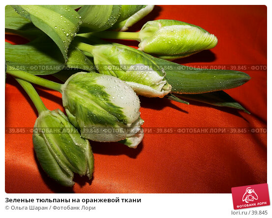 Купить «Зеленые тюльпаны на оранжевой ткани», фото № 39845, снято 11 марта 2006 г. (c) Ольга Шаран / Фотобанк Лори