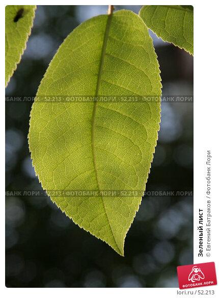 Зеленый лист, фото № 52213, снято 27 мая 2007 г. (c) Евгений Батраков / Фотобанк Лори