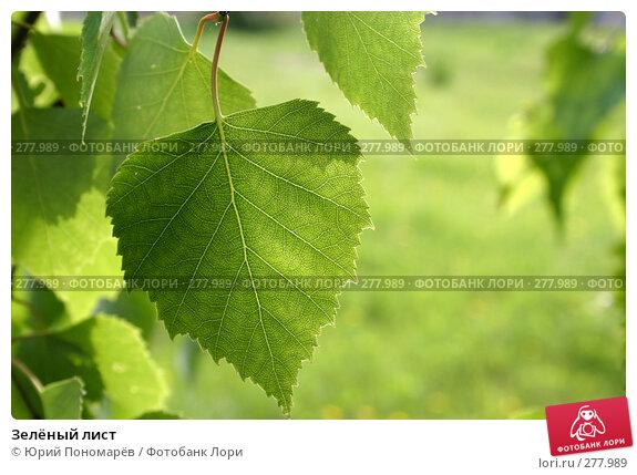 Зелёный лист, фото № 277989, снято 9 июня 2005 г. (c) Юрий Пономарёв / Фотобанк Лори