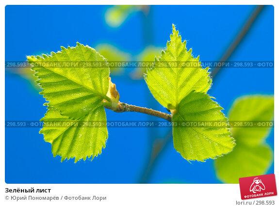 Зелёный лист, фото № 298593, снято 11 мая 2008 г. (c) Юрий Пономарёв / Фотобанк Лори