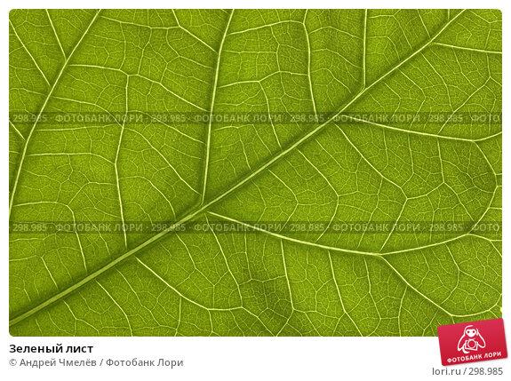 Зеленый лист, фото № 298985, снято 10 февраля 2008 г. (c) Андрей Чмелёв / Фотобанк Лори