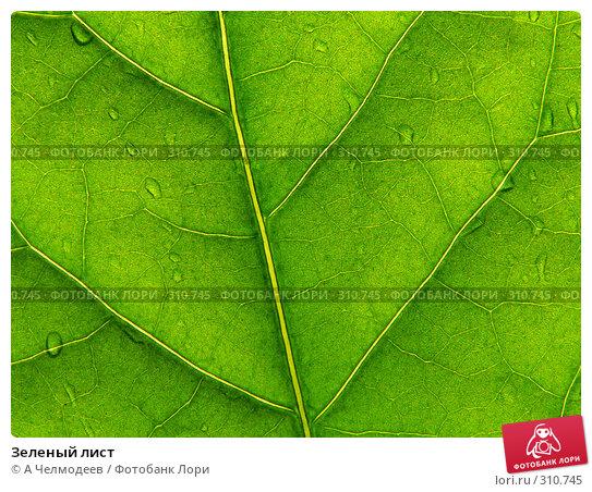 Купить «Зеленый лист», фото № 310745, снято 23 апреля 2006 г. (c) A Челмодеев / Фотобанк Лори