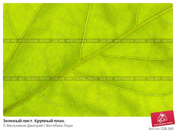 Зеленый лист. Крупный план., фото № 228369, снято 12 марта 2008 г. (c) Мельников Дмитрий / Фотобанк Лори