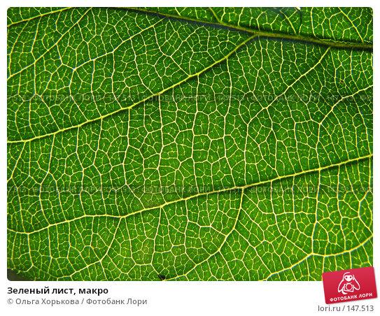 Зеленый лист, макро, фото № 147513, снято 13 августа 2007 г. (c) Ольга Хорькова / Фотобанк Лори