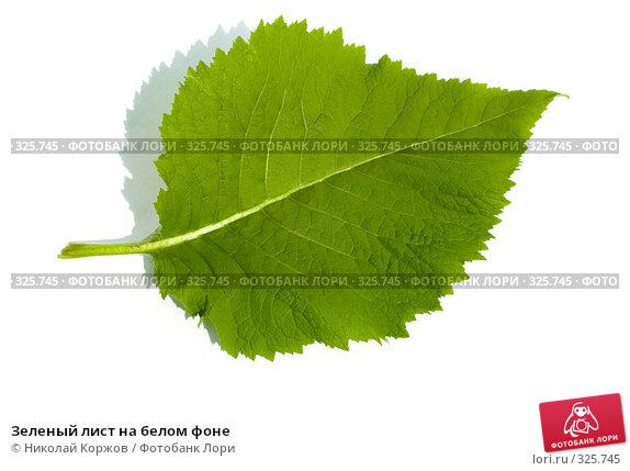 Зеленый лист на белом фоне, фото № 325745, снято 14 июня 2008 г. (c) Николай Коржов / Фотобанк Лори